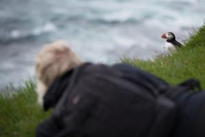 Lunnefågel och fotograf