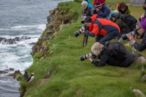 Lunnefågel och fotografer